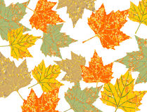 colorful maple leaves Stock Image