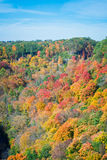 Colorful maple leaves in a mountain, at the fall season. The beautiful and warm fall/autumn season in Canada Stock Images