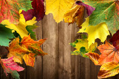 Colorful maple leaves and wood background. Colorful maple leaves in autumn frame a wood planks background Royalty Free Stock Image