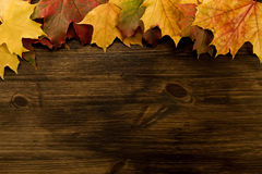 Colorful maple leaves on wooden background. Thanksgiving Stock Images