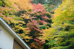 Colorful maple with roof Royalty Free Stock Photos