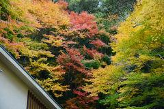 Colorful maple with roof Stock Photo