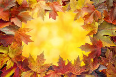 Colorful Maple Tree Fall Leaves Border with Bokeh Royalty Free Stock Photo