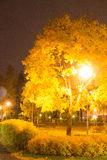 Colorful Maple Tree at night. In dark,mooved leafes Royalty Free Stock Images