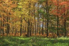 Colorful maples and meadow Stock Images