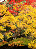 Colorful maples and moss at Kotoin Temple Stock Photo