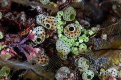 Free Colorful Marine Invertebrates On Coral Reef Stock Image - 83096541