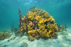 Colorful marine life underwater in a coral reef Stock Photo