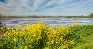 Colorful marshy landscape in springtime Stock Image