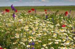Colorful meadow Royalty Free Stock Photo