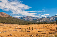 Colorful meadow in autumn in Yosemite Stock Photos