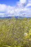 Colorful meadow background Royalty Free Stock Photos