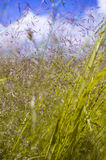 Colorful meadow background Stock Photo
