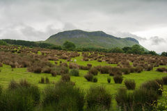 Colorful meadow close to Sligo, Connacht. Republic of Ireland Royalty Free Stock Photography