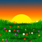 Colorful meadow Stock Photography