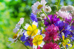 Colorful meadow flowers Stock Photo