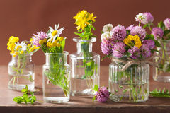 Colorful medical flowers and herbs in bottles Royalty Free Stock Images
