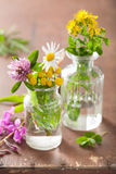 Colorful medical flowers and herbs in glass jars Stock Images