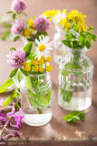 Colorful medical flowers and herbs in jars Royalty Free Stock Image