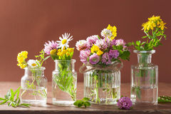 Colorful medical flowers and herbs in jars Royalty Free Stock Photography