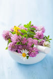 Colorful medical flowers and herbs in mortar Stock Images