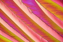 Colorful micro crystals in polarized light royalty free stock photos