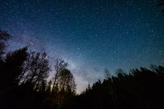 Colorful milky way galaxy seen in night sky through black trees. In forest Royalty Free Stock Photography