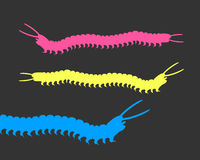 Colorful Millipede Worms Royalty Free Stock Image
