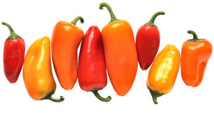 Colorful Mini Peppers Royalty Free Stock Photo