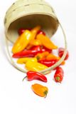 Colorful mini peppers Stock Photography