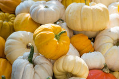 Colorful Mini Pumpkins Royalty Free Stock Image