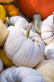 Colorful Mini Pumpkins Royalty Free Stock Photos