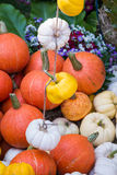Colorful Mini Pumpkins Royalty Free Stock Images
