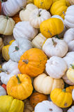 Colorful Mini Pumpkins Royalty Free Stock Photography