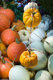 Colorful Mini Pumpkins Stock Photography