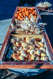 Colorful miniature pumpkins for sale at a Halloween pumpkin patch. Stock Photography