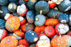 Colorful Miniature Pumpkins Stock Photography