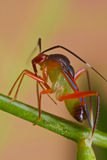 Colorful mirdi bug Royalty Free Stock Photography