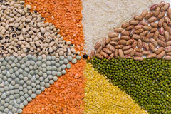 Colorful mix from different dry grains Stock Photo
