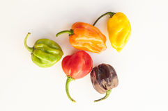 A colorful mix of habanero chili peppers Royalty Free Stock Photos