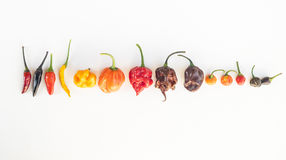 A colorful mix of the hottest chili peppers Royalty Free Stock Photos