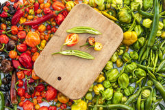 A colorful mix of the hottest chili peppers. Royalty Free Stock Photo