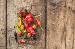 A colorful mix of the hottest chili peppers Royalty Free Stock Images