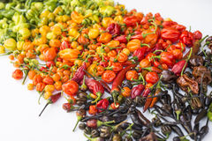 A colorful mix of the hottest chili peppers Royalty Free Stock Photography