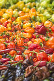 A colorful mix of the hottest chili peppers Stock Photos
