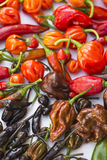 A colorful mix of the hottest chili peppers Stock Photo