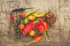 A colorful mix of the hottest chili peppers Royalty Free Stock Photo