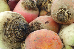 Colorful mix of red,yellow and white beets Royalty Free Stock Photo