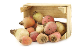 Colorful mix of red,yellow and white beets Stock Images