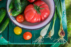 Colorful mix vegetables in garden Stock Photo